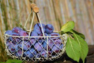 ile kalorii ma ŚLIWKA owoce warzywa baza produktów spozywczych blog odchudzanie