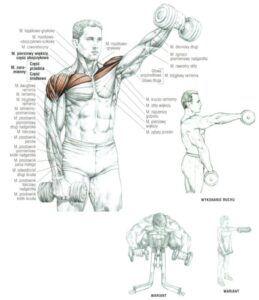 Unoszenie ramion w przód ze sztangielkami cwiczenia na barki atlas cwiczen blog