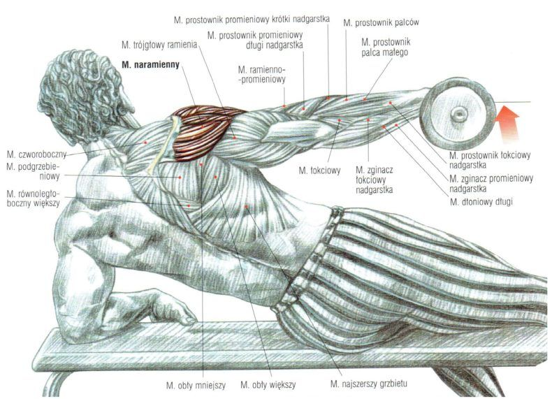 Unoszenie ramion ze sztangielkami w leżeniu cwiczenia na barki atlas cwiczen blog