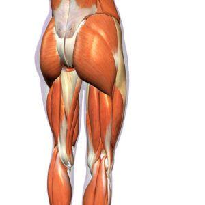 rozciaganie mięśni dwugłowych ud nogi blog atlas cwiczen STRETCHING