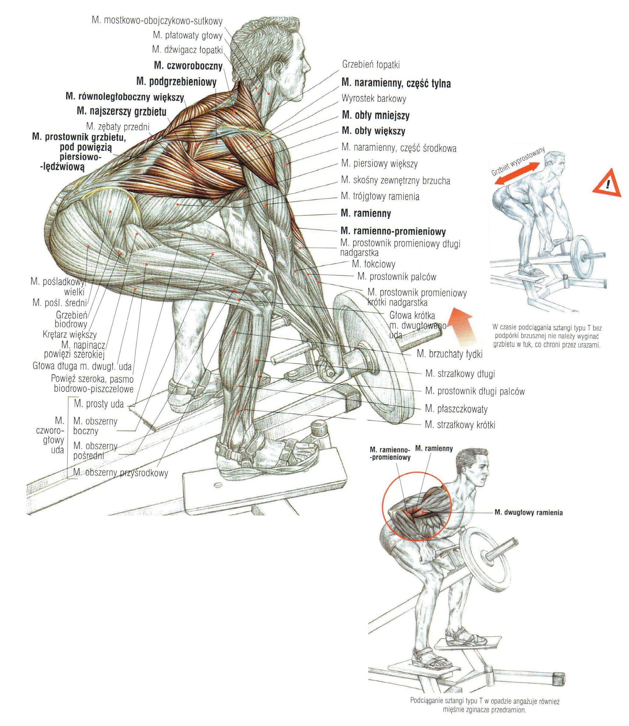 Podciąganie końca sztangi w opadzie ćwiczenia na plecy atlas ćwiczeń