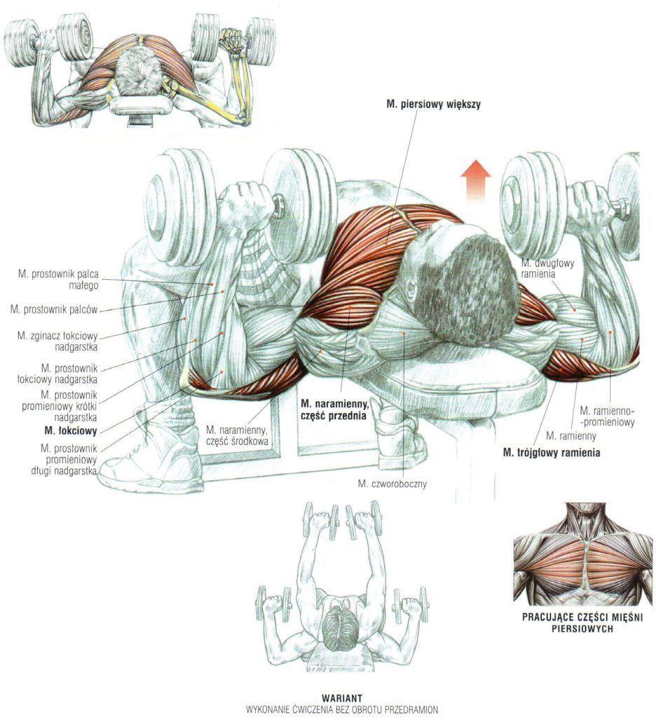 Wyciskanie sztangielek w leżeniu na ławce poziomej ćwiczenia na klate atlas ćwiczeń