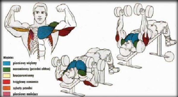 Wyciskanie sztangielek w leżeniu na ławce skośnej – głową w dół ćwiczenia na klate atlas ćwiczeń