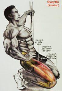 Syzyfki ćwiczenia mięśnie czworogłowe ud mięsień czworogłowy uda siłownia ćwicz sam
