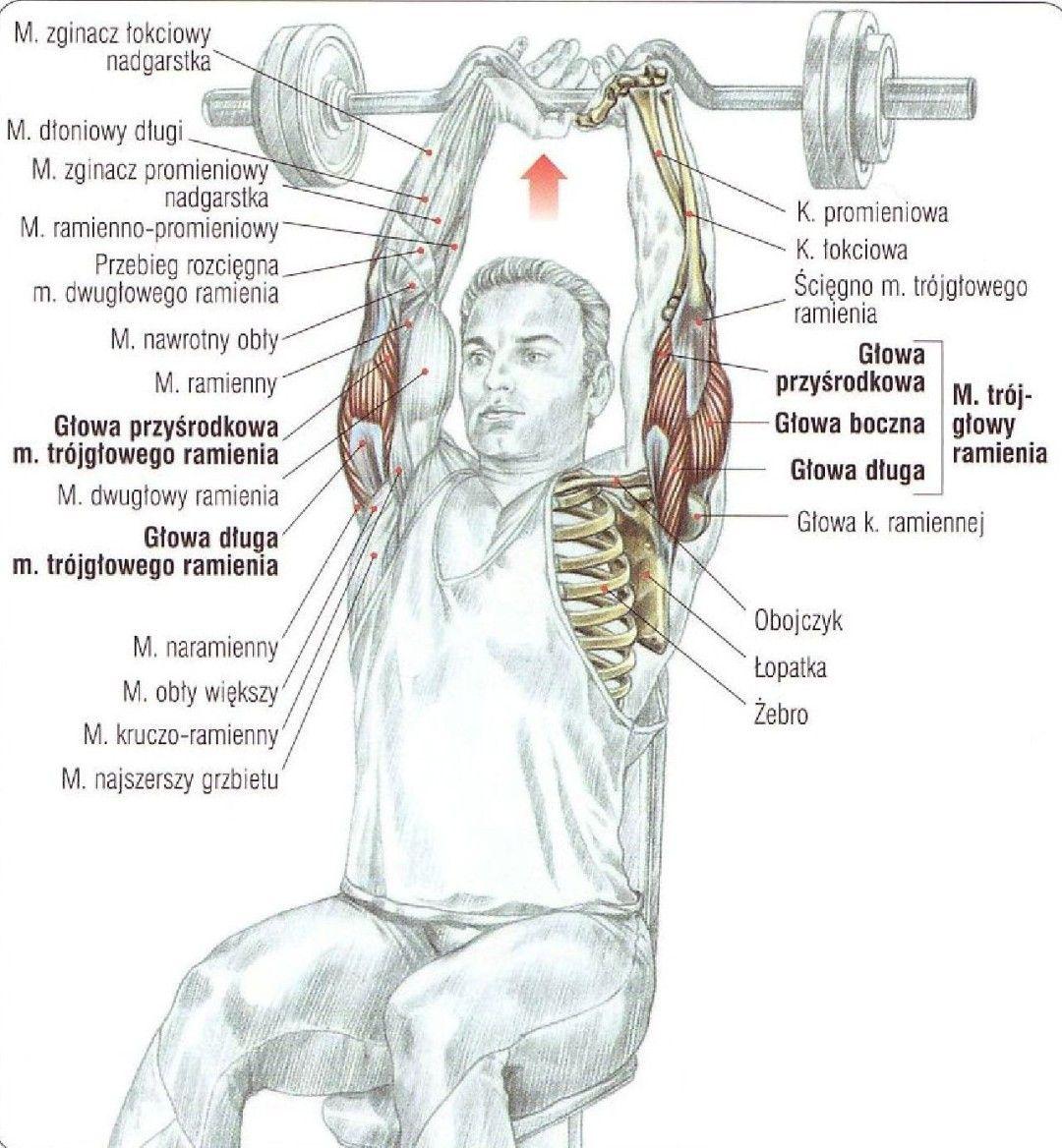 Wyciskanie wrancuskie sztangi siedząc ćwiczenie na triceps atlas ćwiczeń
