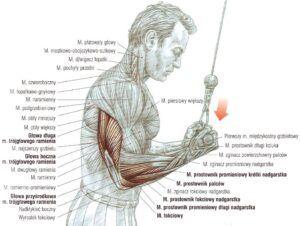 prostowanie ramion na wyciągu górnym podchwyt podchwytem atlas ćwiczeń ćwiczenia na triceps