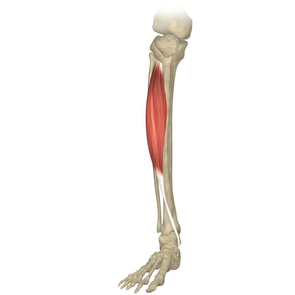 rozciaganie-miesni-piszczeli-nogi-blog-atlas-cwiczen-stretching