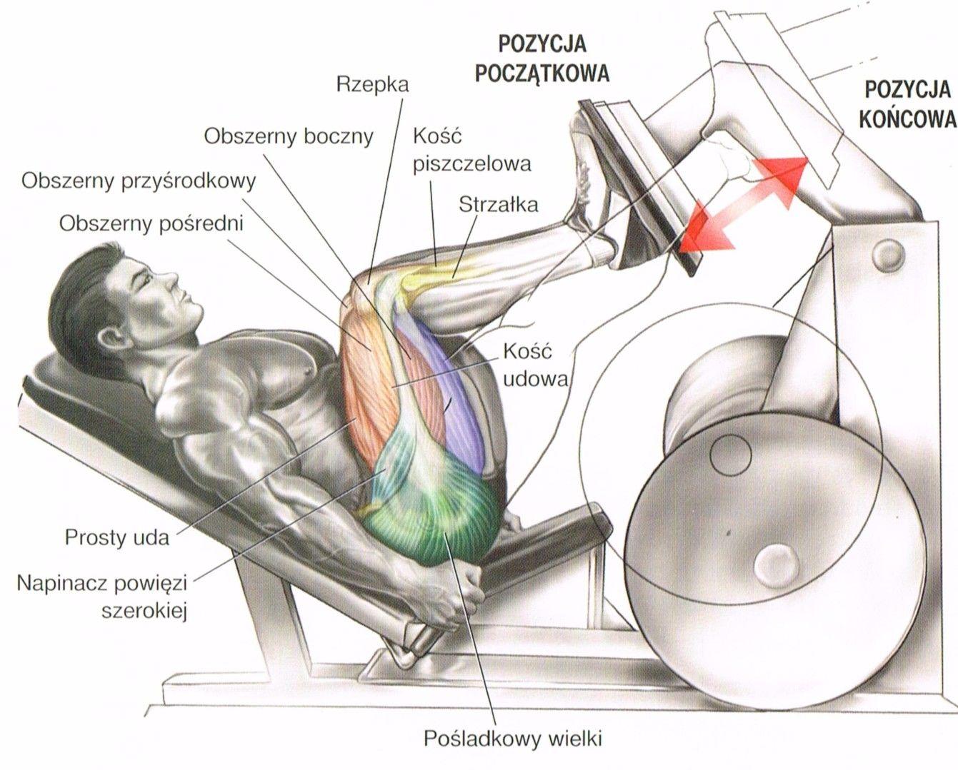 wypychanie nóg na suwnicy wypuchanie ciężaru na maszynie ćwiczenia na uda